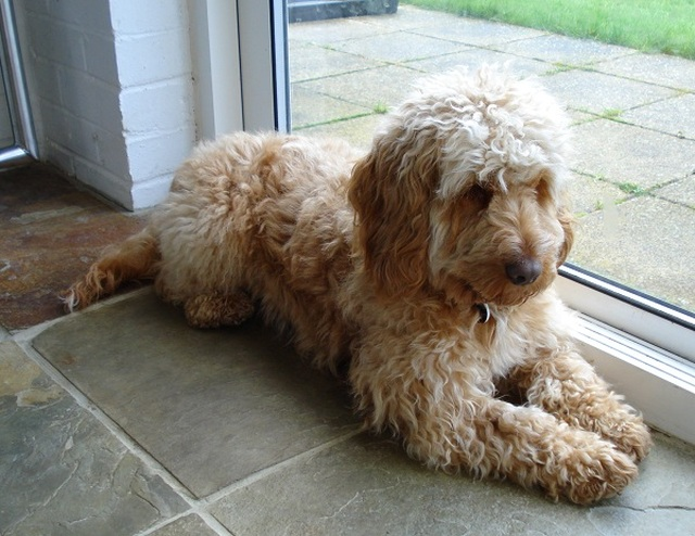 Best Dog Breed For Eczema Sufferers